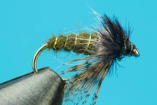 Peeking Caddis