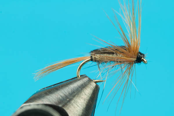 Stillborn Caddis
