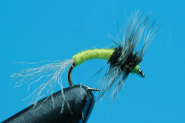 Griffith Gnats Emerger