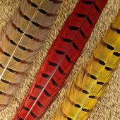 Ringneck Pheasant Feathers--Nature Spirit